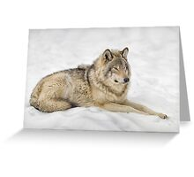 Timberwolf at Rest Greeting Card