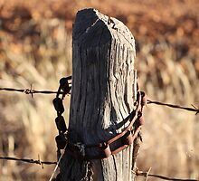 Rustic Fencepost  by Mish Chappell