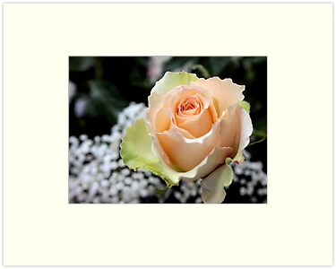 My Perfect Rose by Leann  Rardin