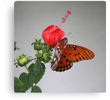 Butterfly on Turk's Cap Canvas Print