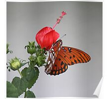 Butterfly on Turk's Cap Poster