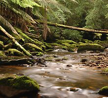 Images of Australia - Cloud Forest by Gerry Pearce