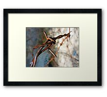 Barbed Wire Flower... Framed Print