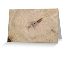 Top view of the annual rings of cut tree closeup Greeting Card