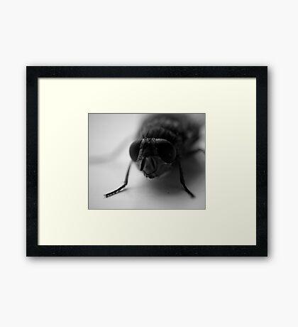 Wayne Framed Print
