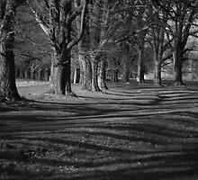 Shadows of Gostwyck by Michael Bradley
