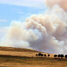 Yarrabin fire 12k's from Cooma NSW  by Kym Bradley