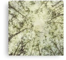 Late Summer Tree Tops Canvas Print