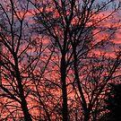 Winter dawn by Heather Thorsen