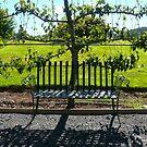 Shady Retreat: Burnie, Tasmania by linfranca