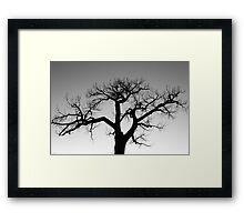 Winter Tree Silhouette Framed Print