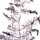 Bracken drawing by Jacqueline Eirian McKay