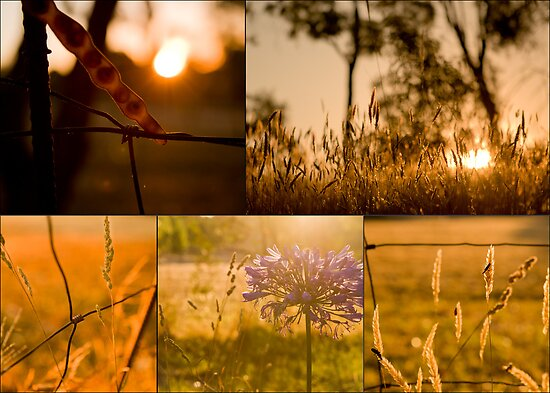 Golden hues collage by White Owl