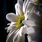 Intimate by Lozzar Flowers & Art