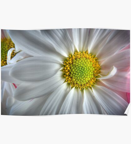 White and Yellow Flower Poster