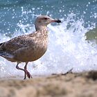 Seagull in Front of Crashing Wave by Timothy Borkowski