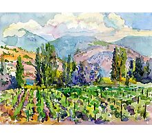 Landscape with vineyard Photographic Print