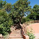 Stone Steps up Adobe Building by dbvirago