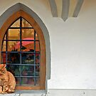Cat in the window by Arie Koene