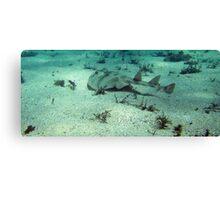 Banjo Shark Canvas Print