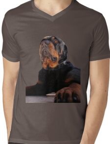 Regal and Proud Male Rottweiler Portrait Isolated Mens V-Neck T-Shirt