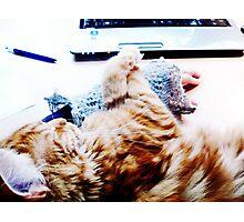 Computer & Cat Photographic Print