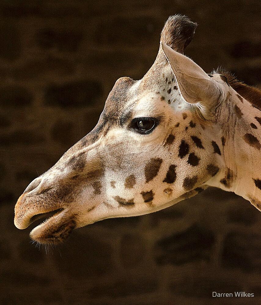Rothschild Giraffe by Darren Wilkes