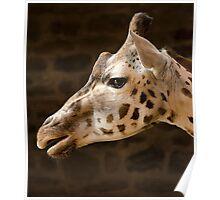 Rothschild Giraffe Poster