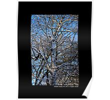 Snow Covered Tree Against Blue Morning Sky  Poster