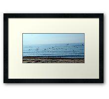 Seagulls in a sunny beach  Framed Print
