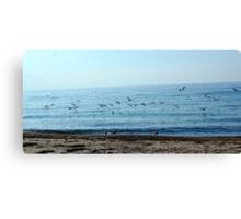 Seagulls in a sunny beach  Canvas Print