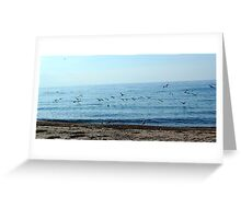 Seagulls in a sunny beach  Greeting Card