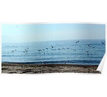Seagulls in a sunny beach  Poster