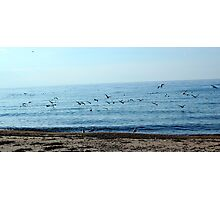 Seagulls in a sunny beach  Photographic Print