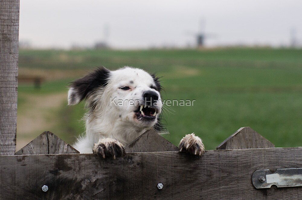 Beware of the dog  by Karen Havenaar