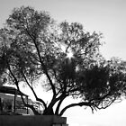 Tree in black and white  by mkokonoglou