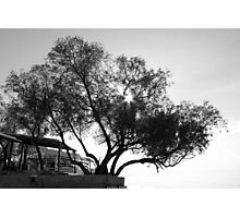 Tree in black and white  Photographic Print
