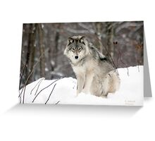 Wolf in Canadian Winter Greeting Card