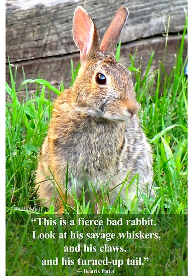 This Is A Ferocious Bunny by Mindy Eekhoff
