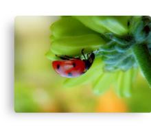 A  Curious Ladybug Canvas Print