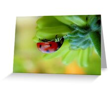 A  Curious Ladybug Greeting Card