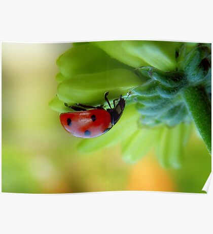 A  Curious Ladybug Poster