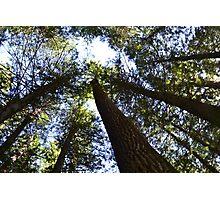 Treetops Photographic Print