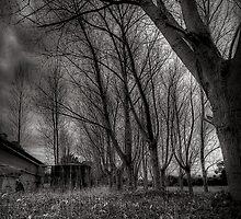 Elm Tree by Michael Sanders