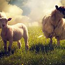 3 Sheep by ajgosling