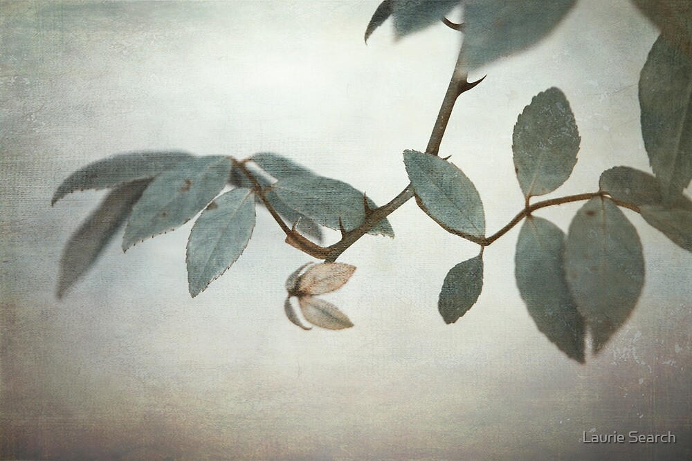 How Delicate This Balance by Laurie Search