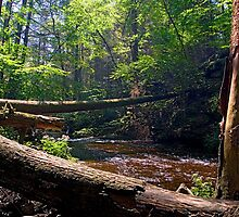 Fallen Trees Across Kitchen Creek by Gene Walls