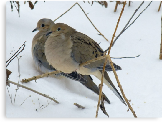 A Pair Of Mourning Doves by Tracy Faught