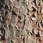 Tree bark by Morag Anderson