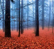 Fog on leaves by Edgar Laureano